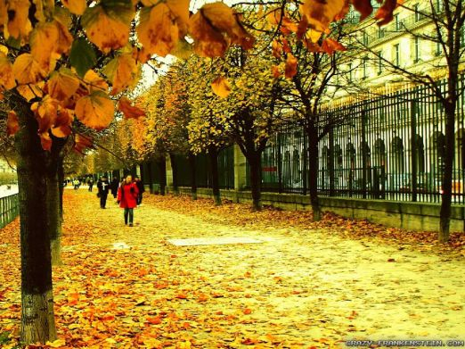 paris-streets-autumn-in-france-wallpapers-1024x768-1